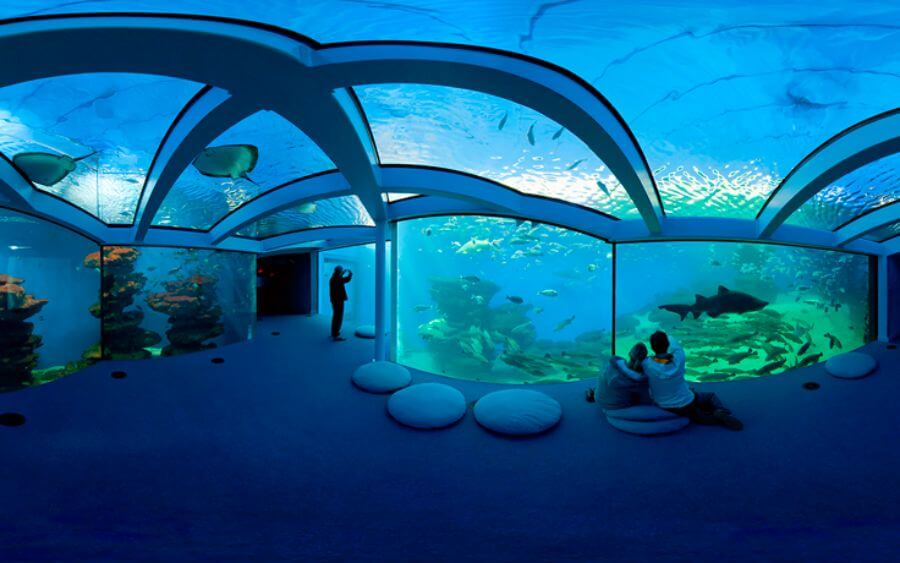 Discover Palma Aquarium during your holidays at the Hotel Saratoga