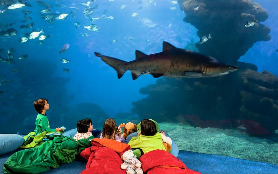 Visit for children and adults to the Palma Aquarium during their stay at the Hotel Saratoga